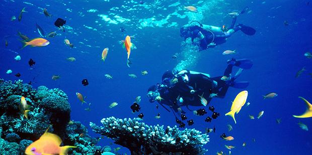 Scuba diving in croatia dubrovnik diving center blue planet for Dive planet